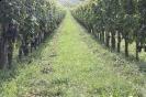 Eindrücke aus den Weingärten